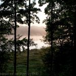 Foggy Lake in the Forest